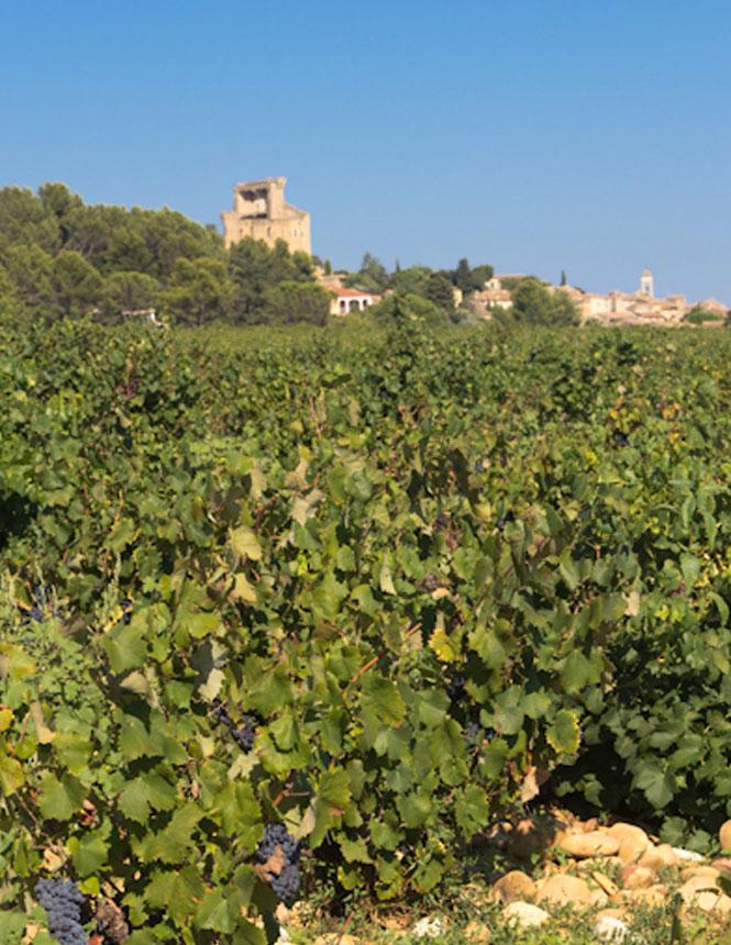 Landscape of Chateauneuf du Pape