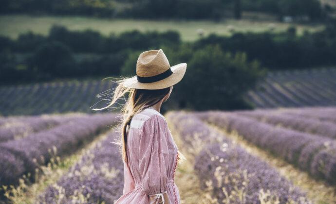 Lavender field in Provence @ Coquard M.