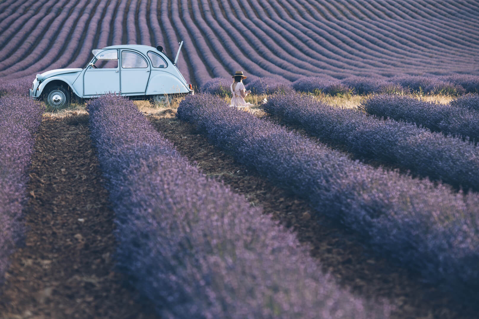 Lavender in the Enclave of the Popes