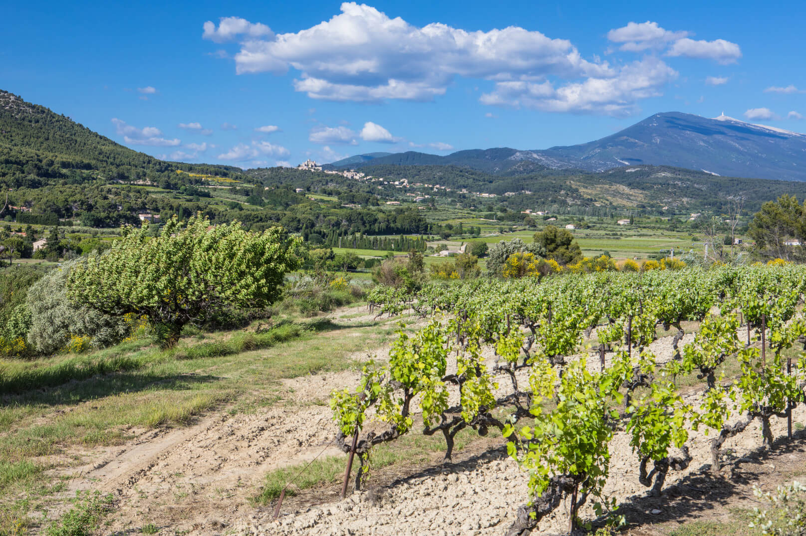 Vineyards of the Ventoux