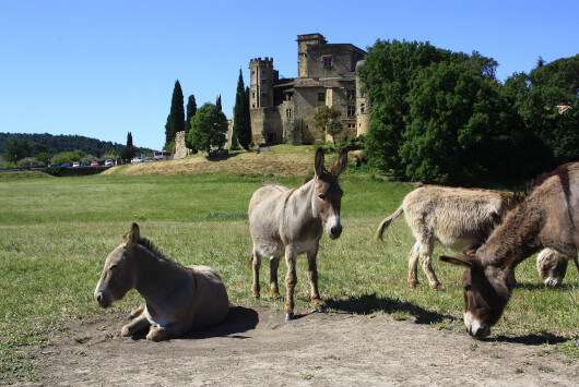 Donkeys in front of the Château of Lourmarin ©HOCQUEL A