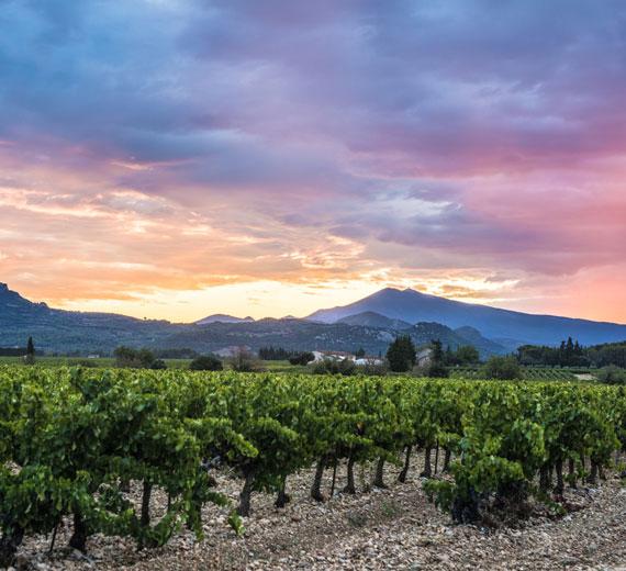 Ventoux vineyards @ Kessler