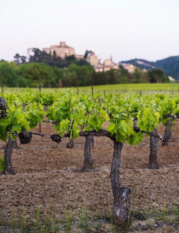 Luberon vineyards @ Coquard