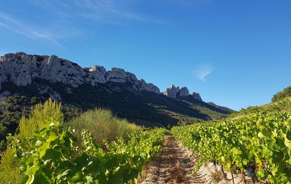 Dentelles de Montmirail vineyards @ Maisonnave
