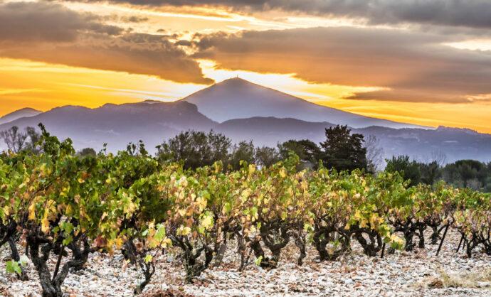 Rhône Valley vineyards © Kessler