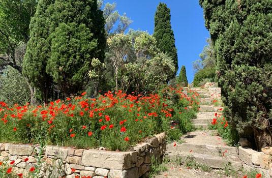 Jardin de l'abbaye st Andre @ Abbaye