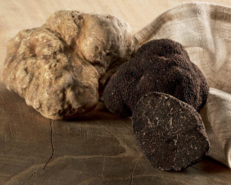 Truffles © Plantin