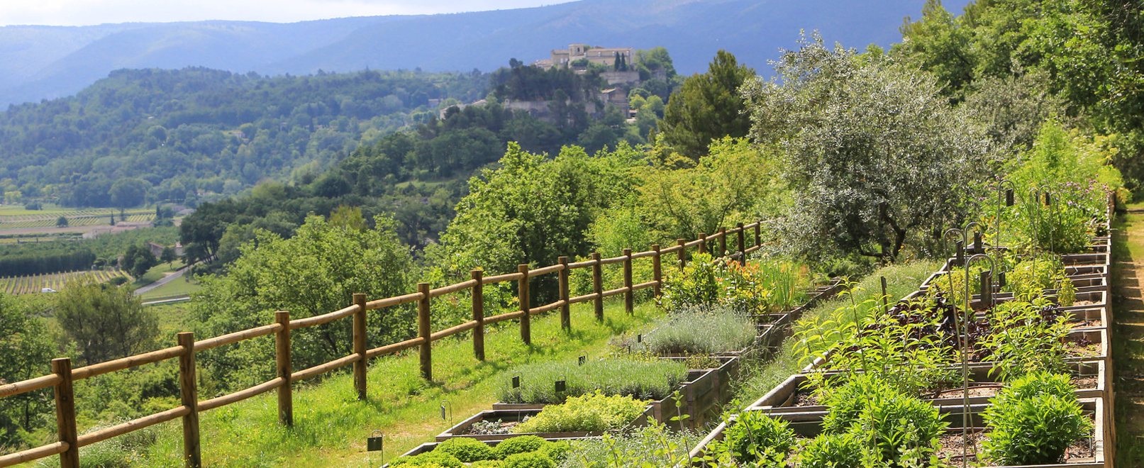 Botanic discovery at the Domaine de la Citadelle