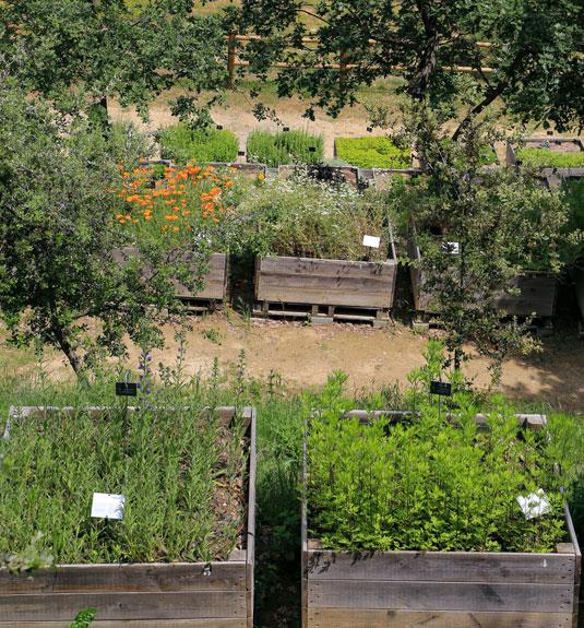 Medicinal plants in the Citadelle's garden