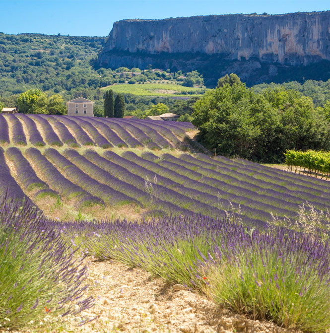 Lioux village in Provence