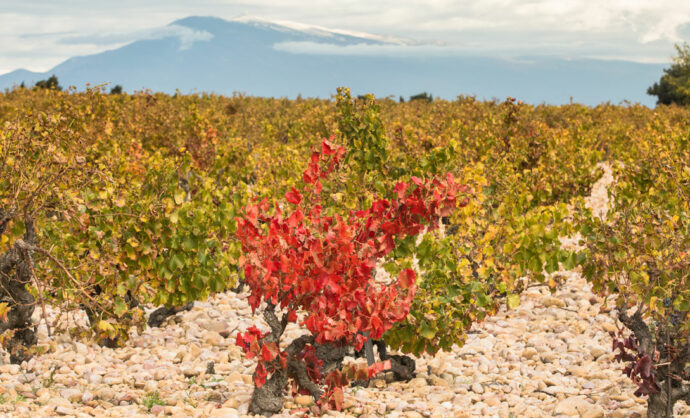 Wines of Vaucluse