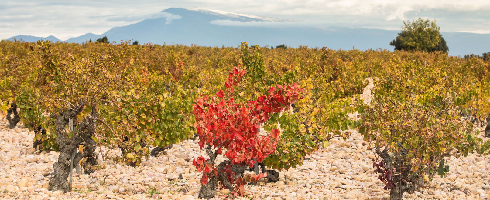 Wines of Vaucluse © Kessler